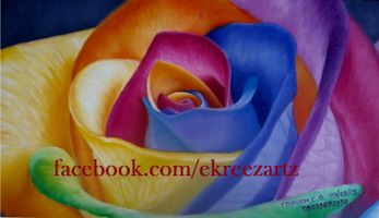My Rainbow Rose