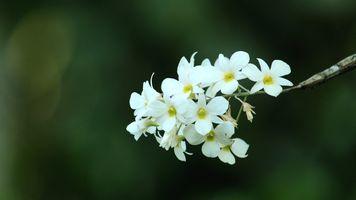 God of Flower