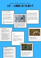 Bird Photography NE1? Basic Bird Photography guide - (BiF) Birds in Flight