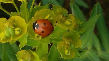 Eye Spotted a Ladybug