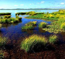 A swamp lake