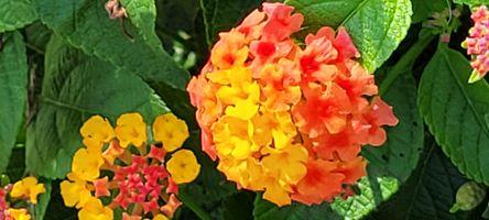 Flower 20210823_095608