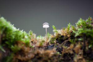 Tiny, tiny mushroom