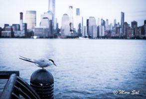 A bird waiting..