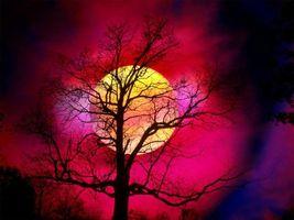 Natura Notturna