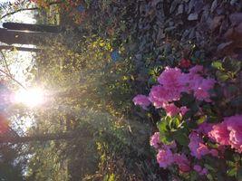 Fall time sun set