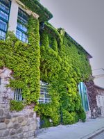 Beautiful building with a climbing plant