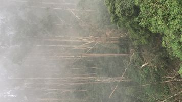 Fog on tree