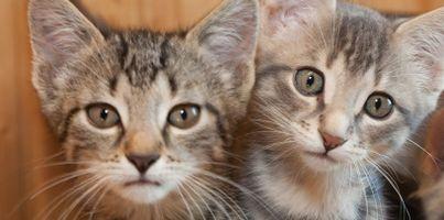 Litter-of-kittens~2