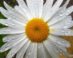 After the Rain_1