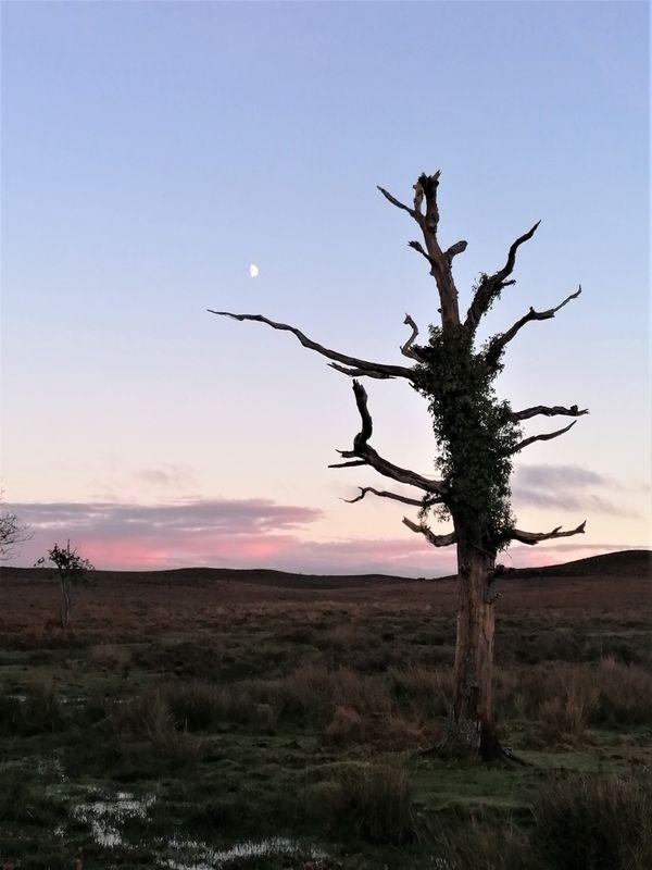 Barren Heathland