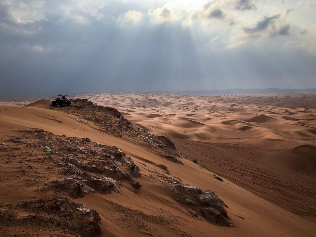 Desert after rain