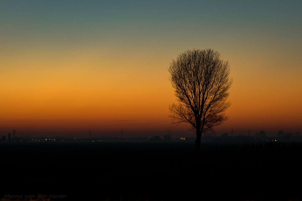 Silhouette of a lone tree against the twilight sky