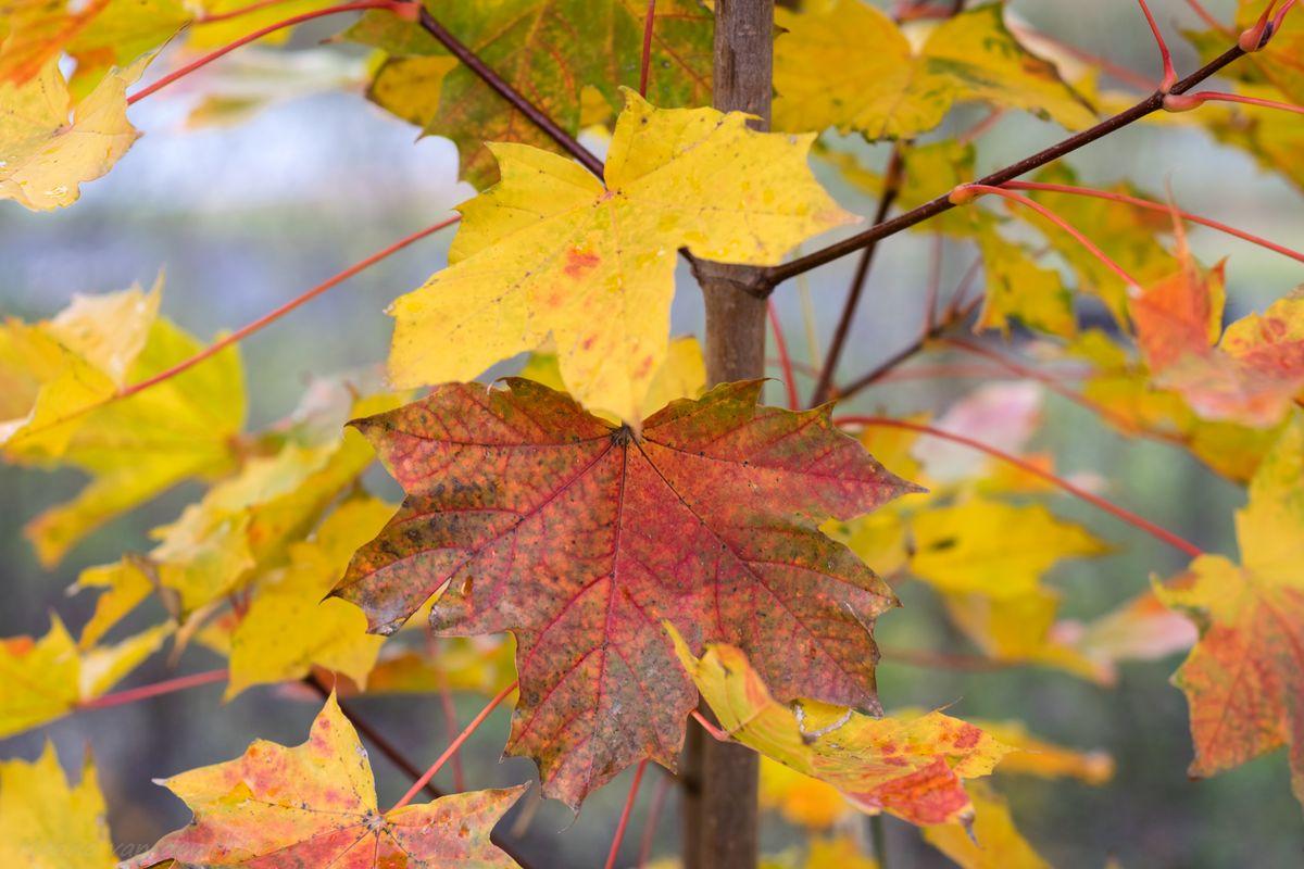 Autumn Colors / Herfstkleuren
