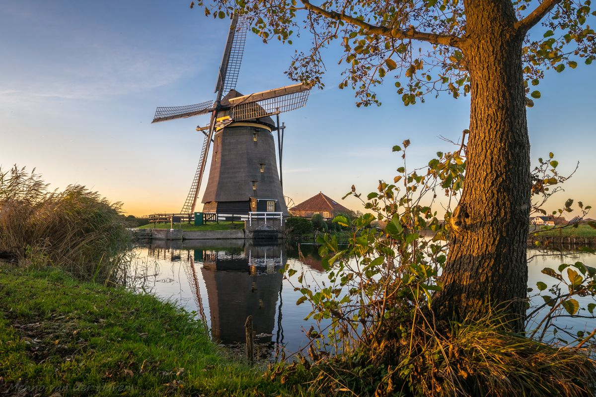 Tree with windmill along a canal, during golden hour