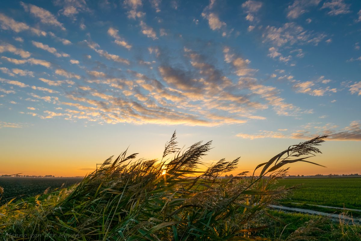 Clouds and grassreeds at sunset
