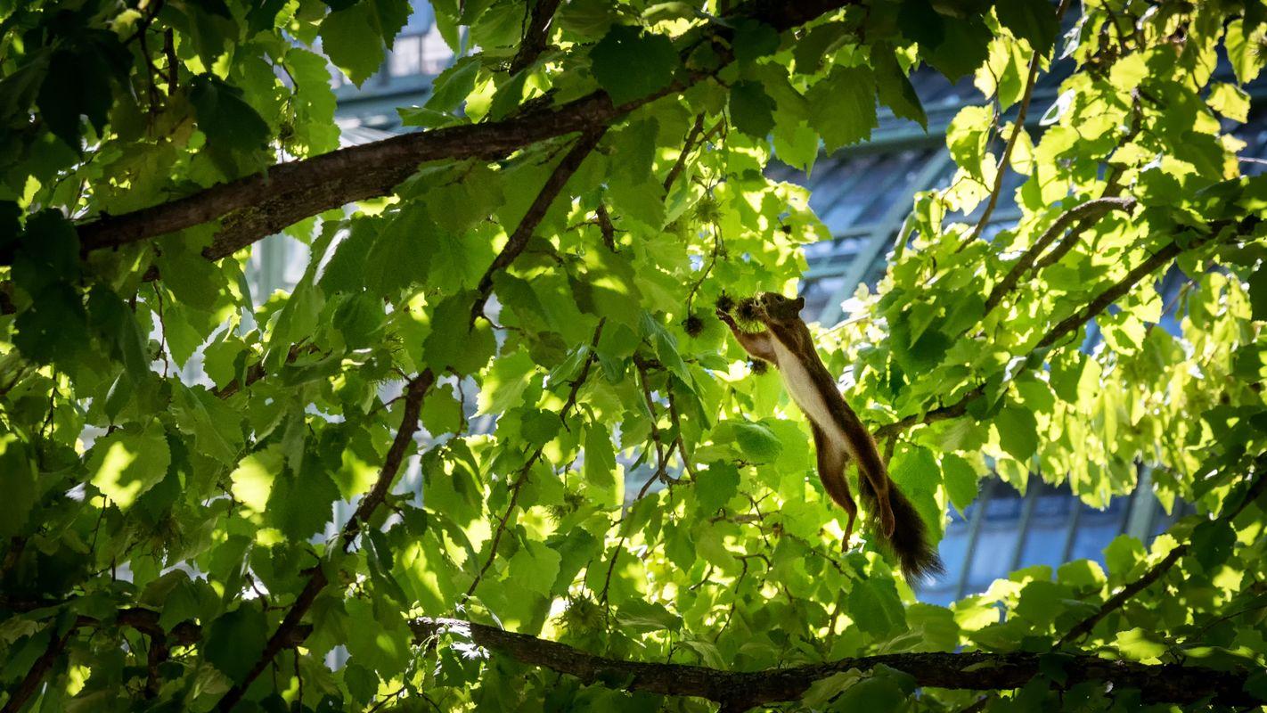 Leap of squirrel