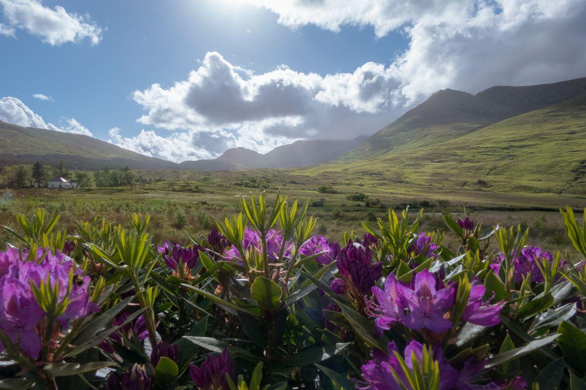 Blooming Mayo
