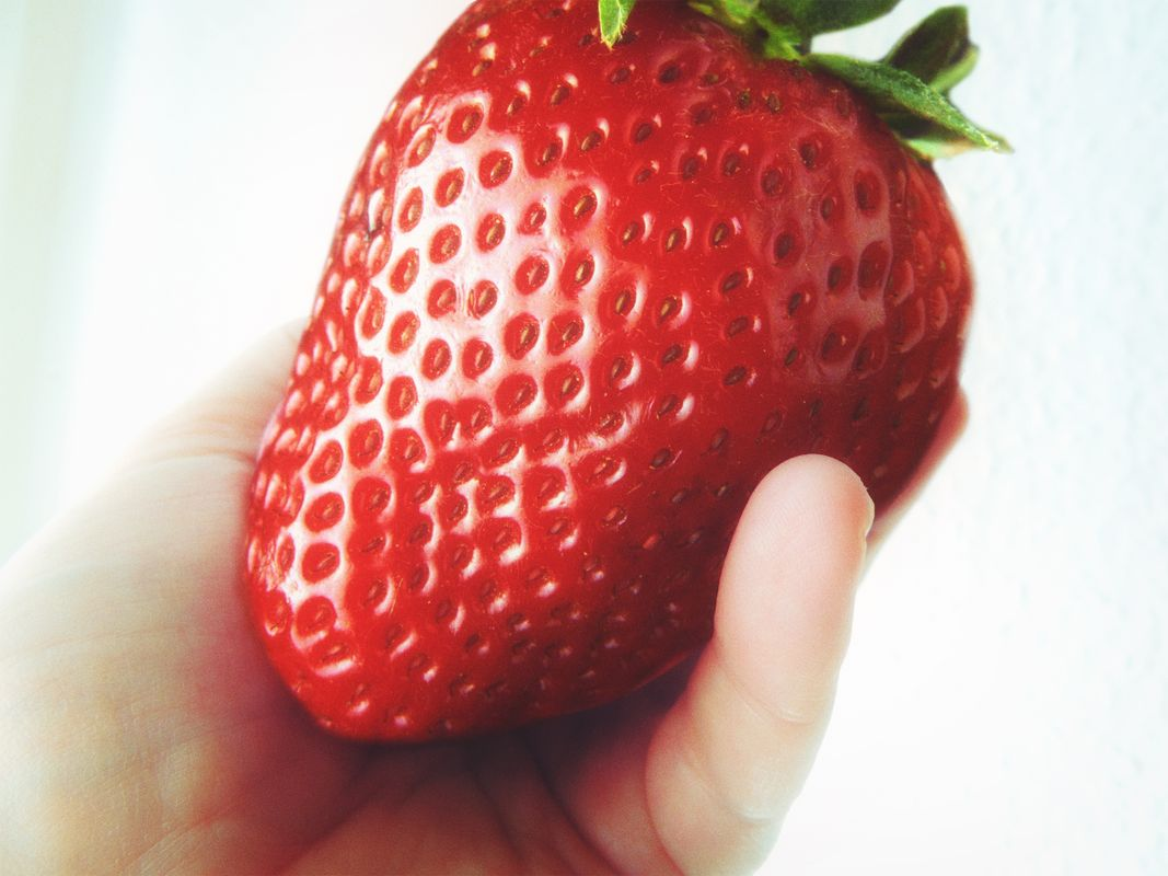 Largest red strawberry almost as big as a mans hand picked in germany