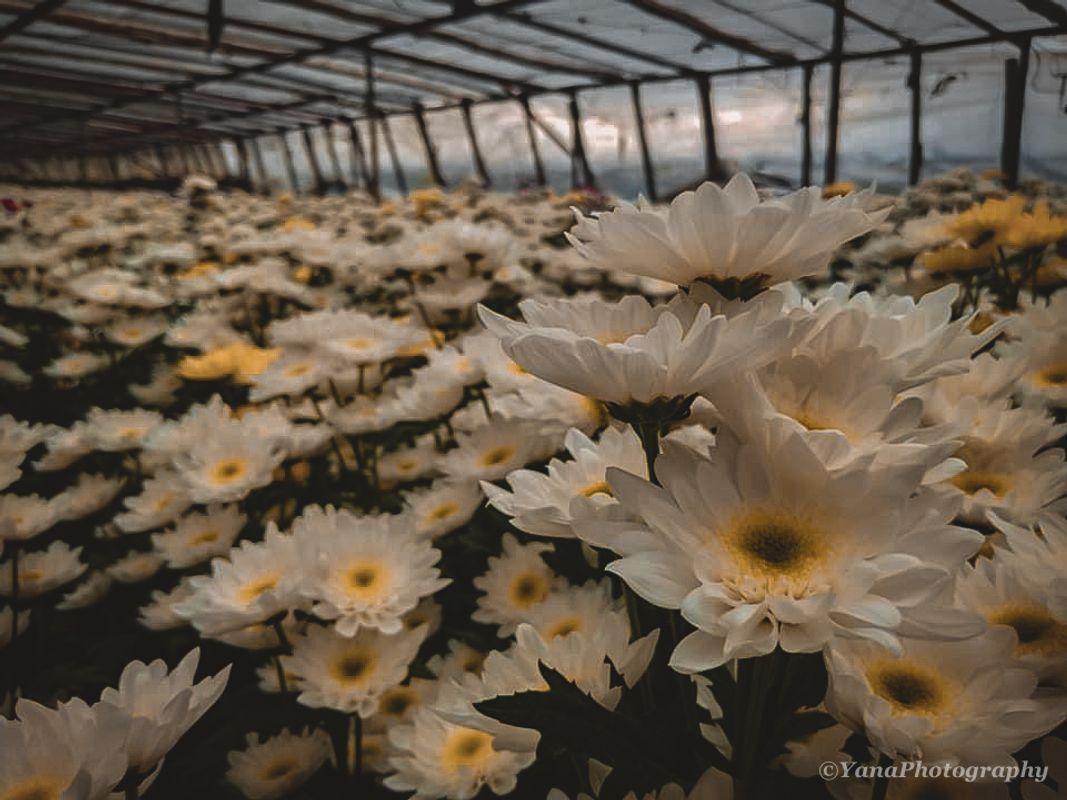 Panagbenga Flowers