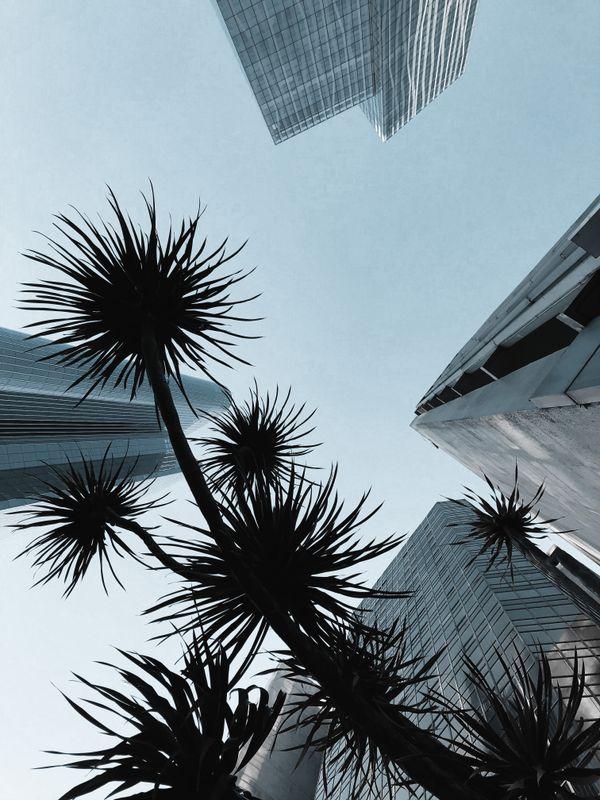 City Upward View