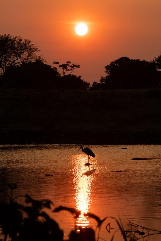 Guapilo Sunrise