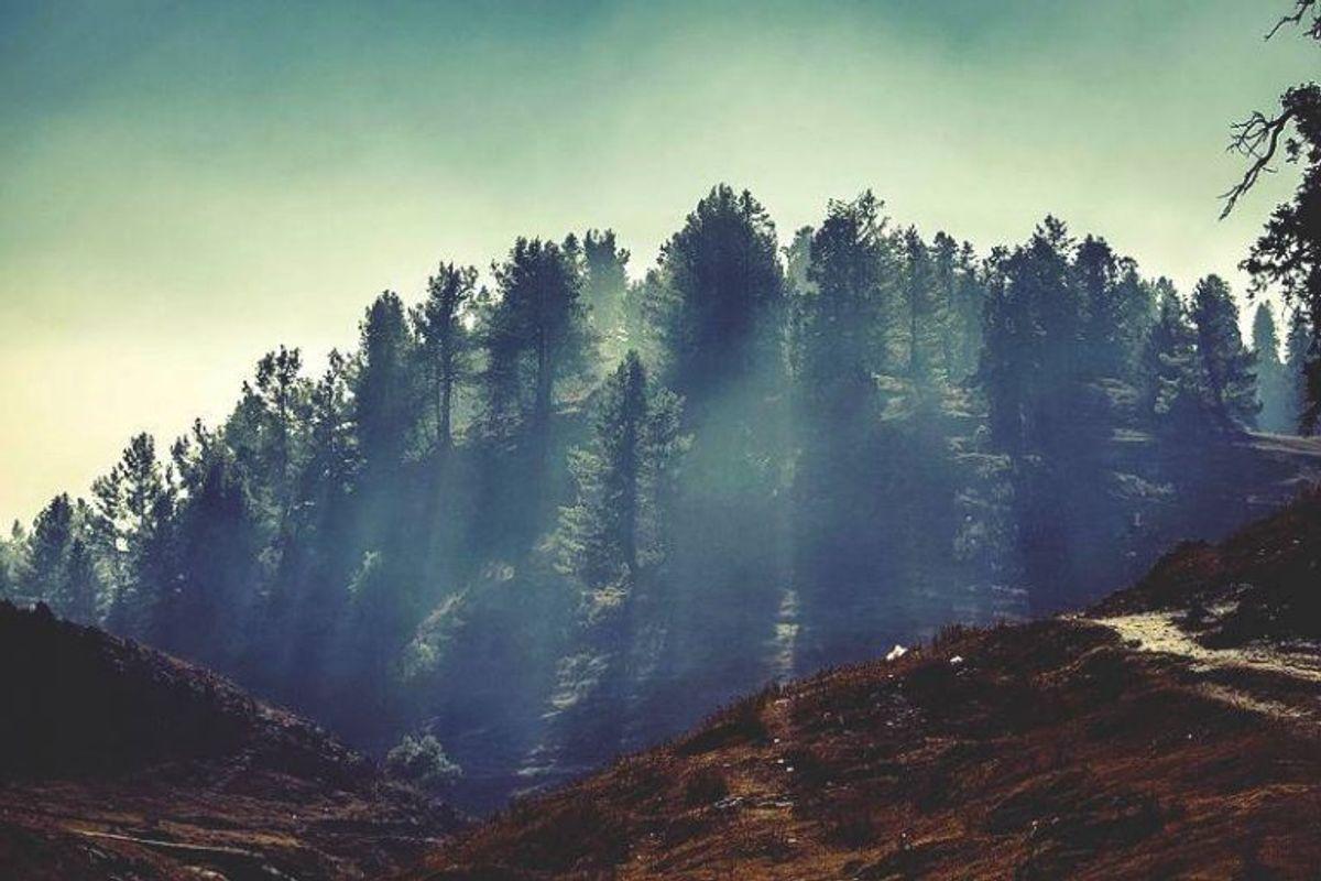 Nathia_Gali_Trees-