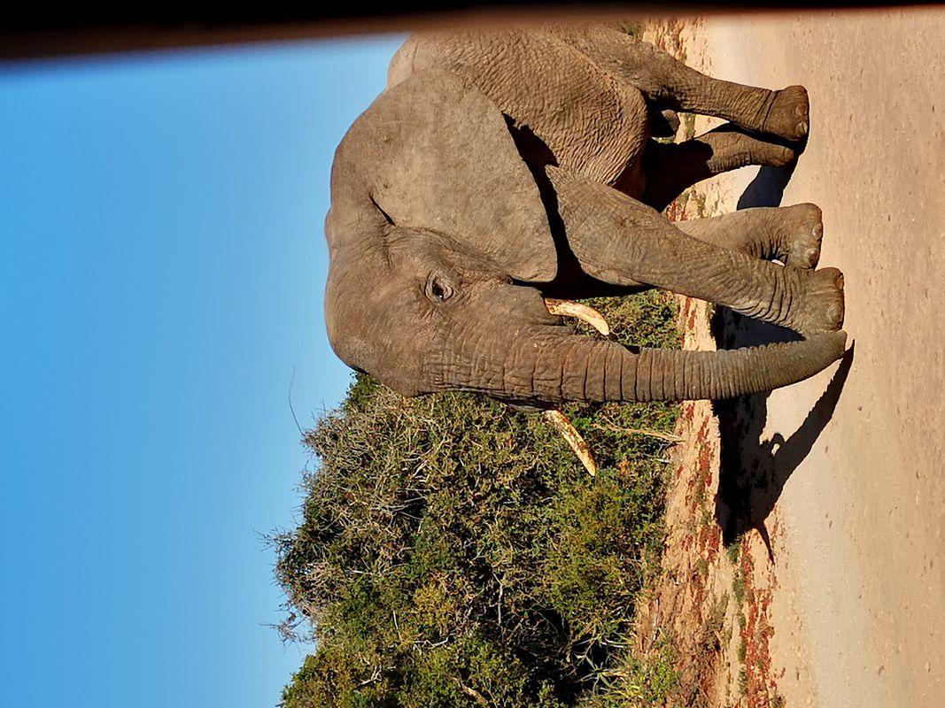 Elephants & Wild Life South Africa