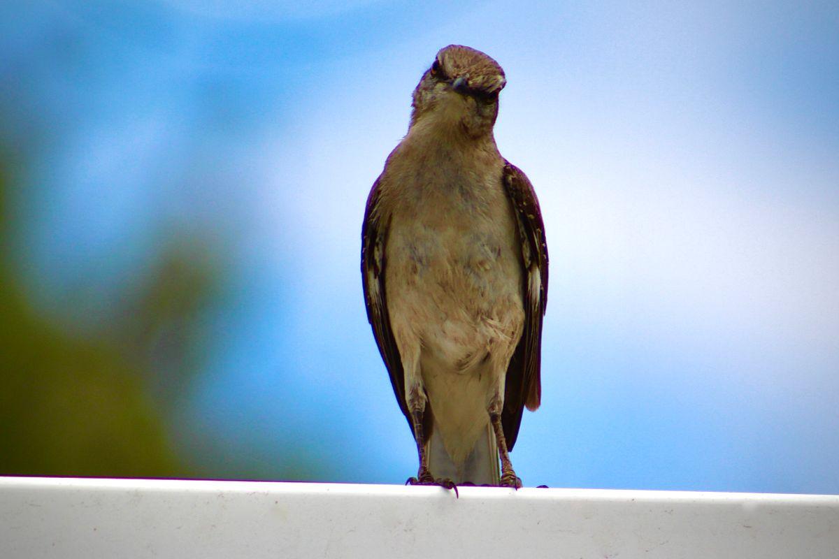 Hi bird