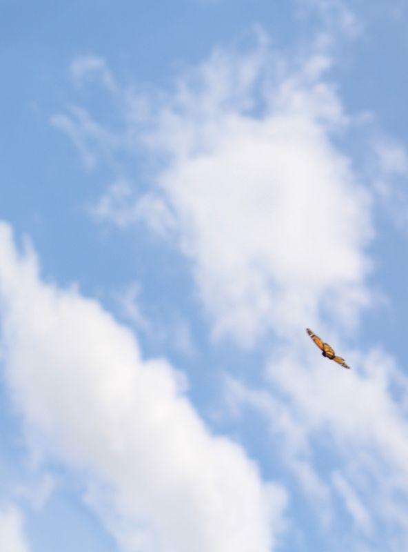 Catch flight