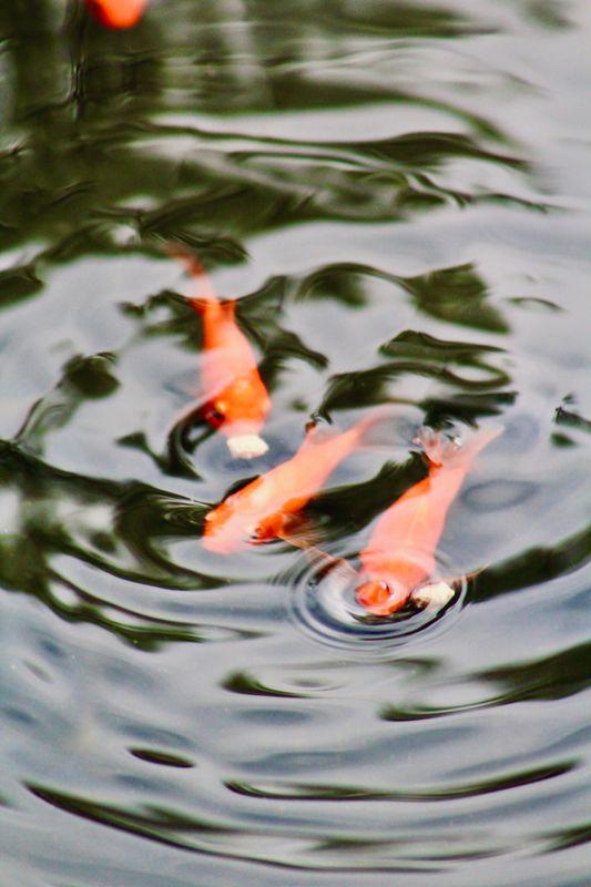 3 goldfish