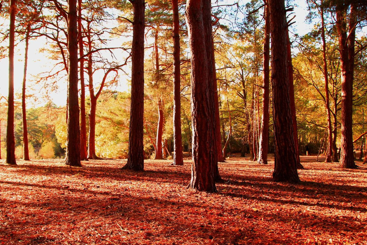 Autumn forest shadows