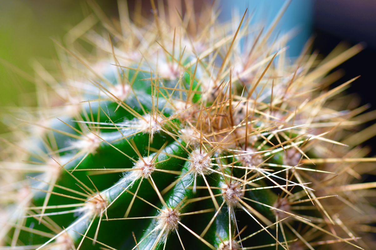 Cactus Plant.