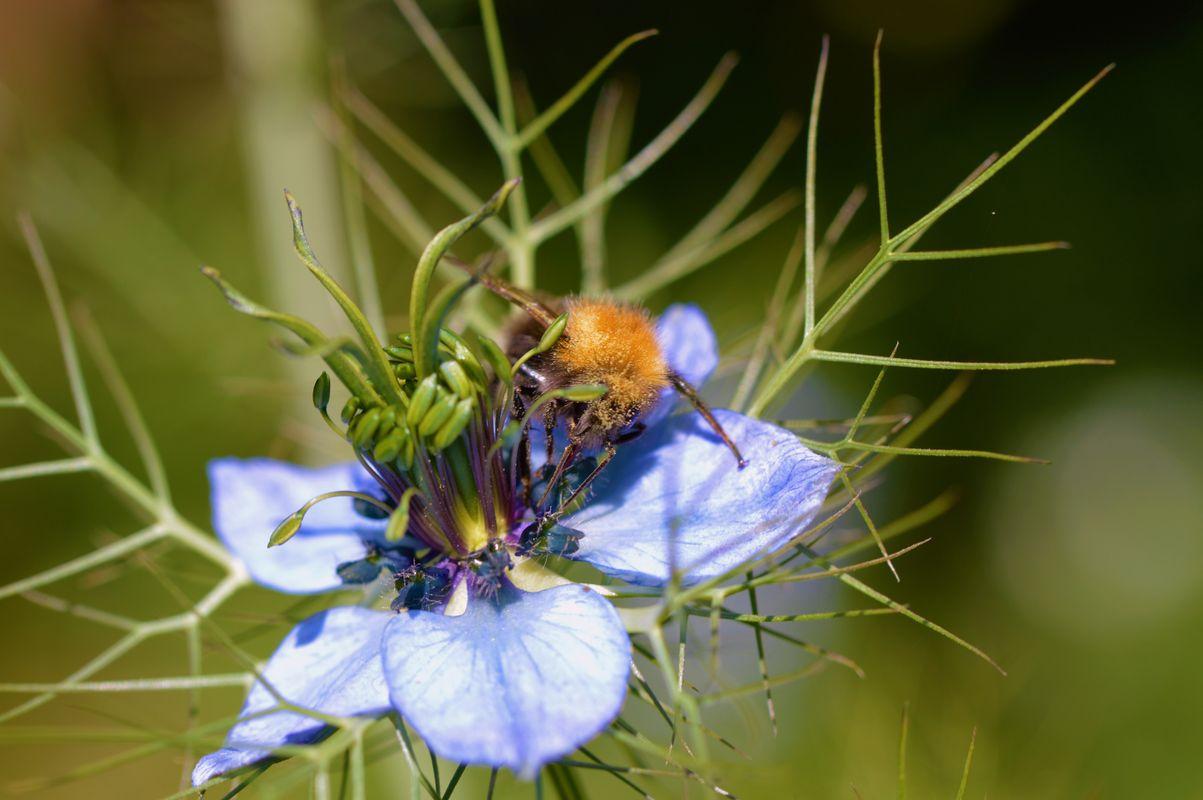 Nigella and Bee.