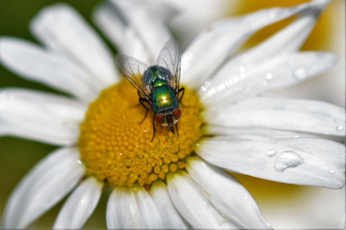 Fly And Daisy.