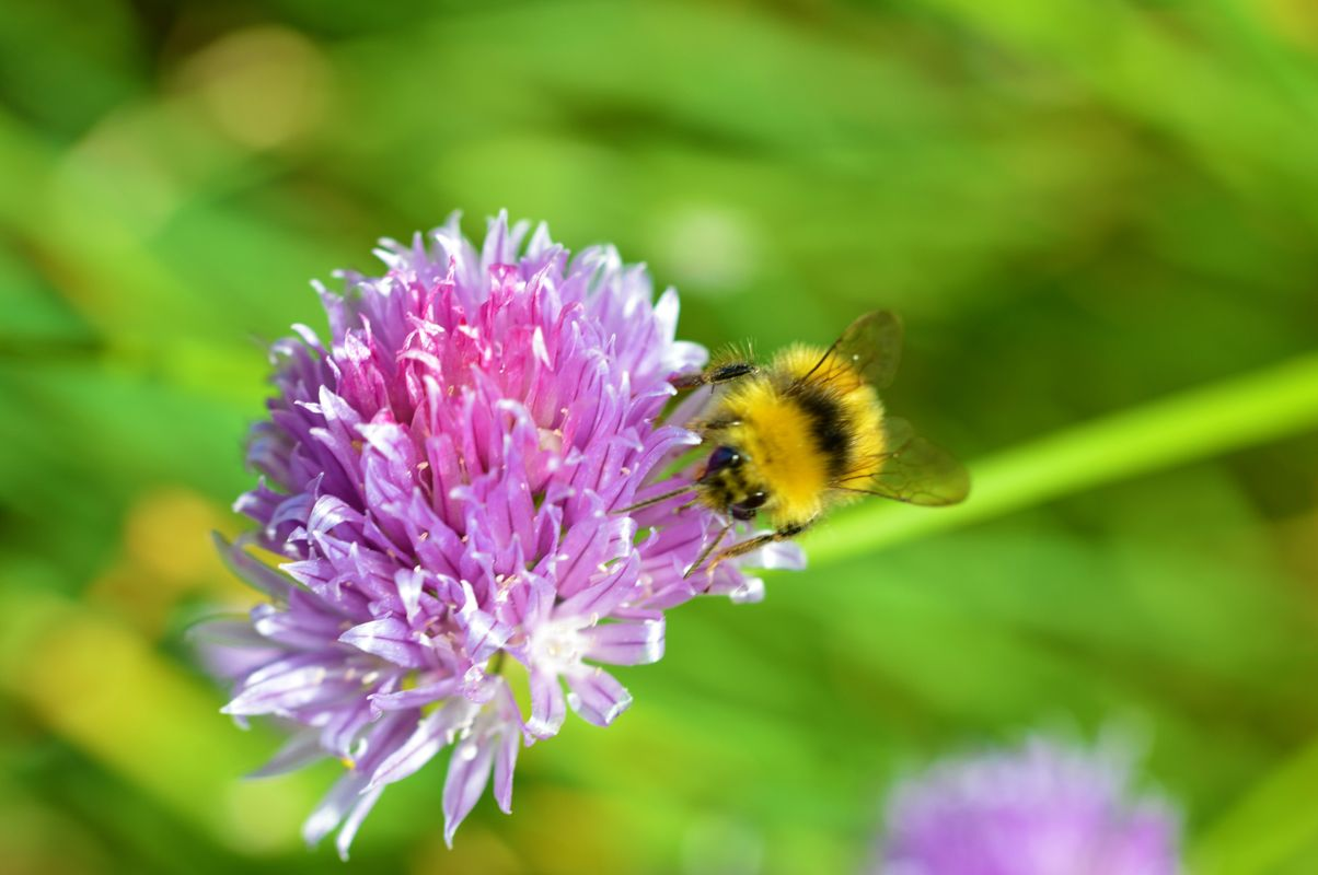 Bee and Chive.