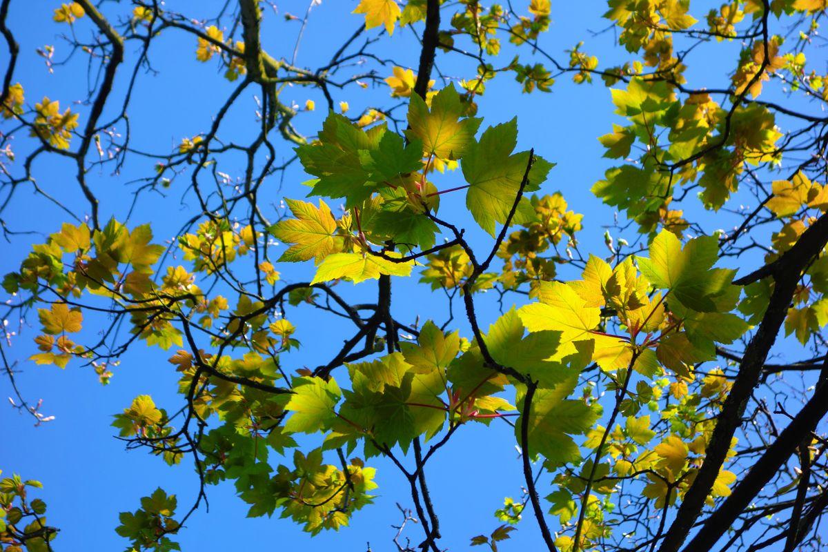 Leaves in Spring.