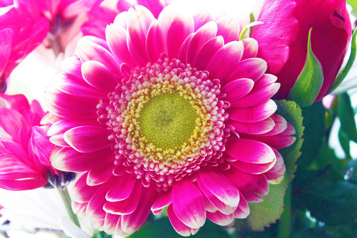 Colourful flower