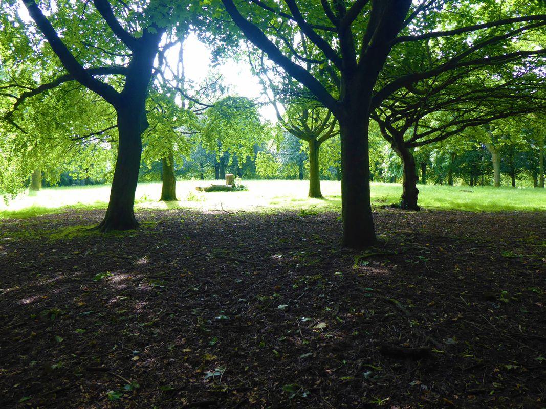 A park landscape