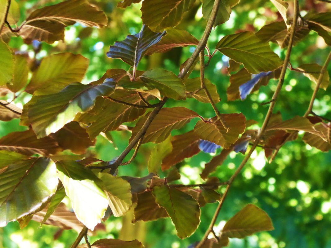 Leaves in springtime
