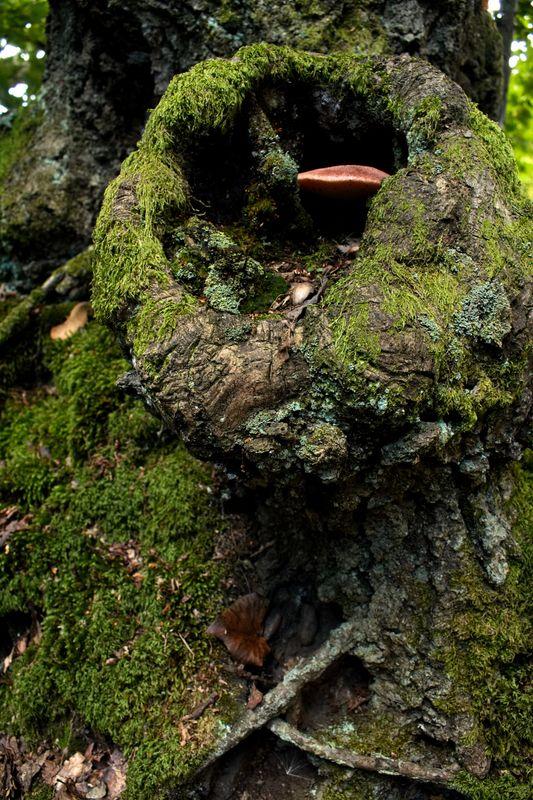 Peeping Fungi
