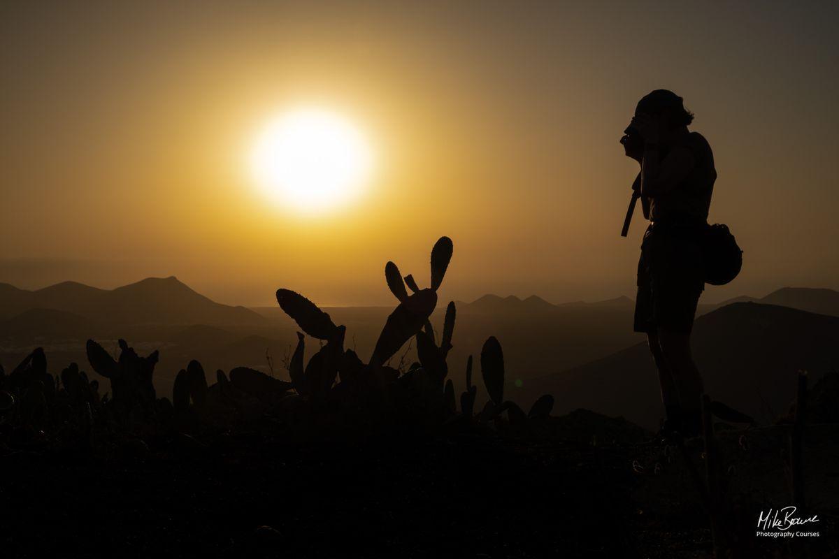 Sunset On The Cactus Field