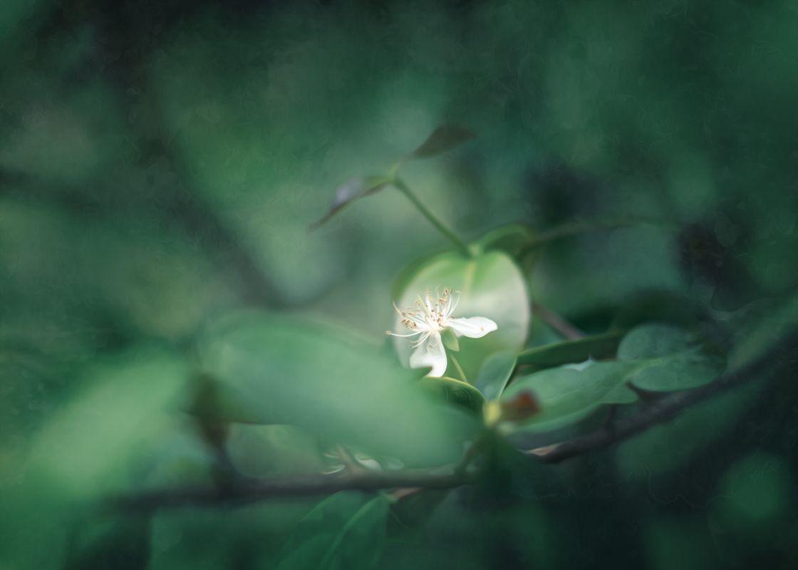 Gauzy white Flower