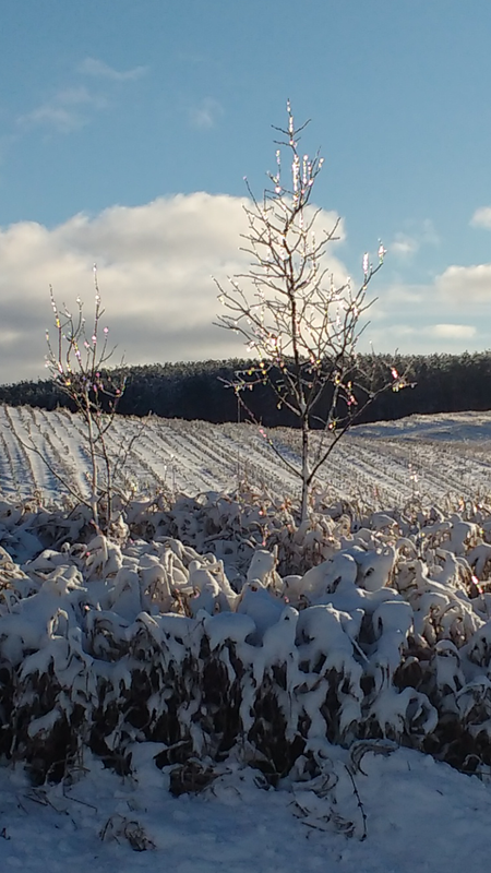 Icicles in an open field