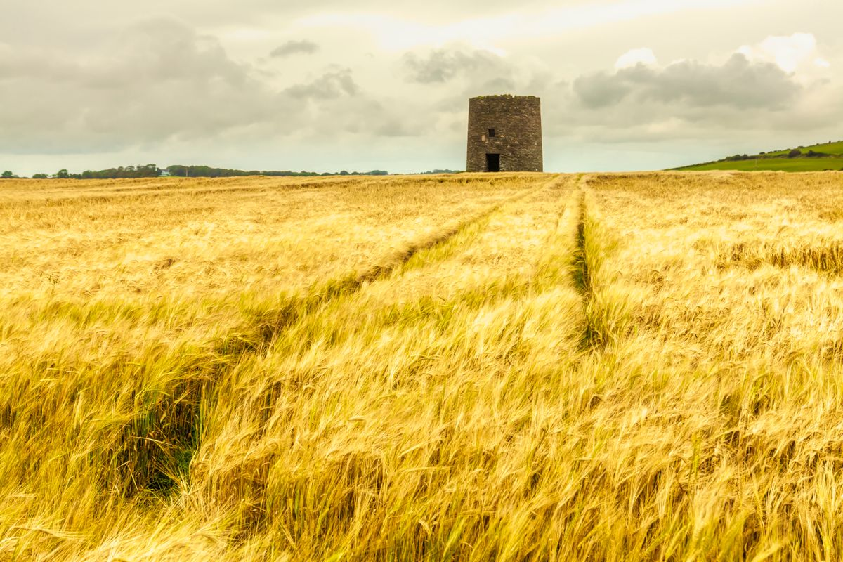 Barley field with a fort in the background