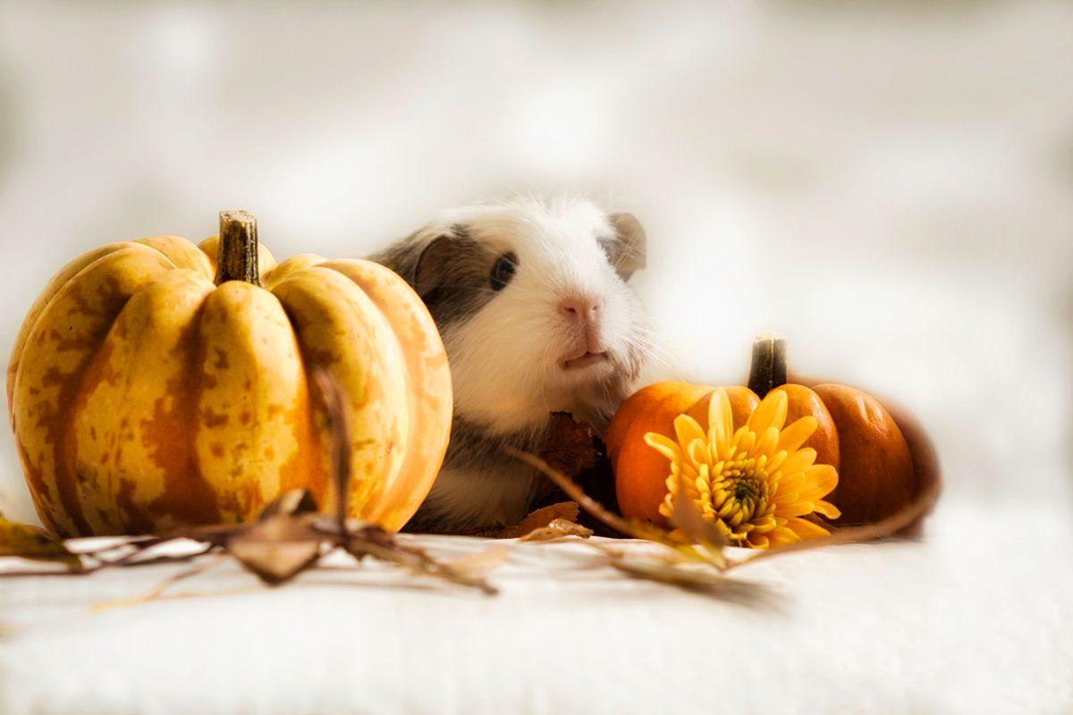 Happy Pumpkin time