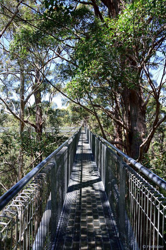 Starting the treetop walk