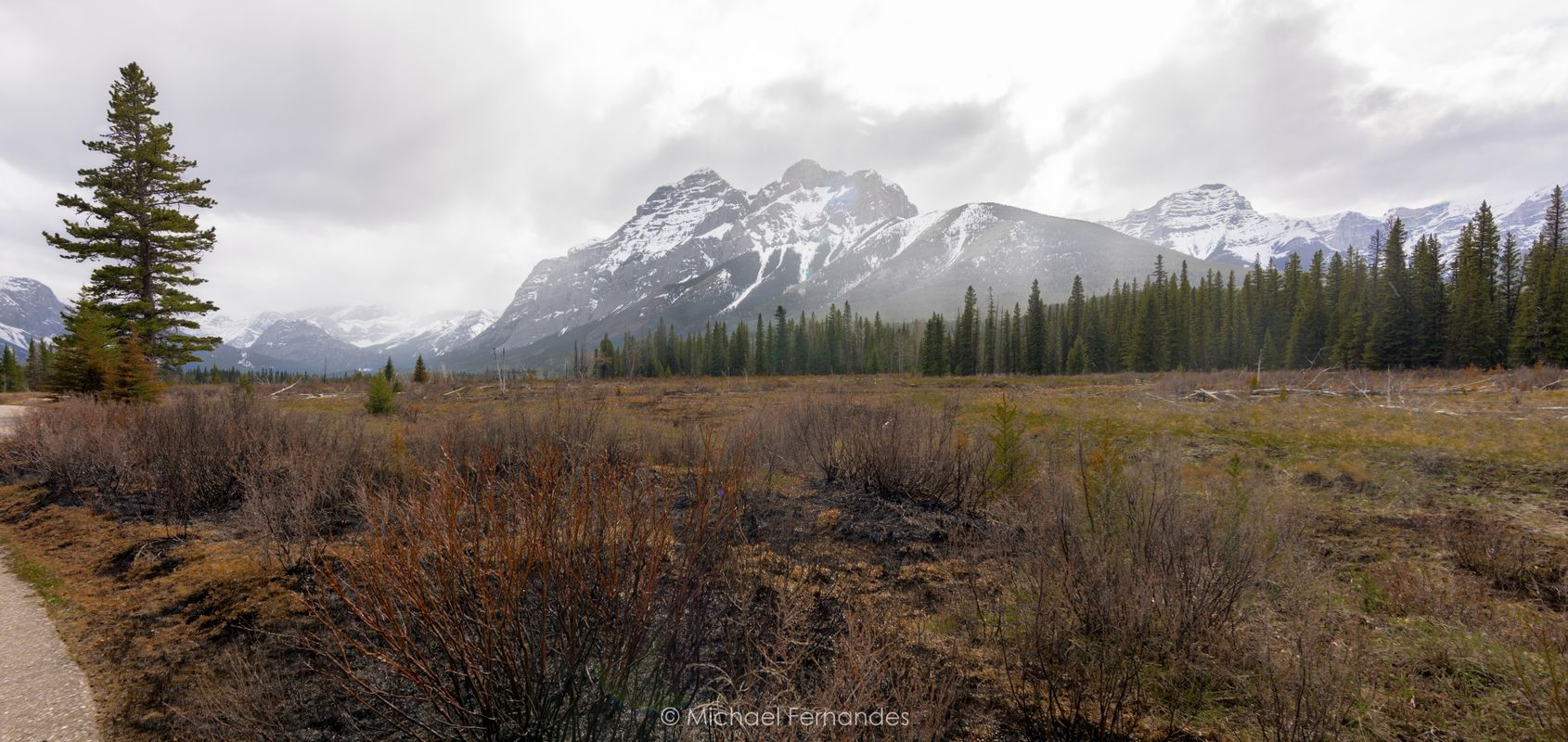 Kananaskis Country after a Fire