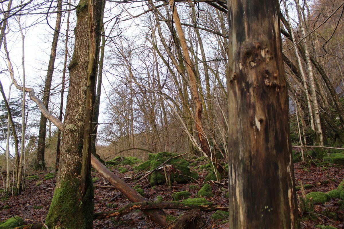 Norwegian trees