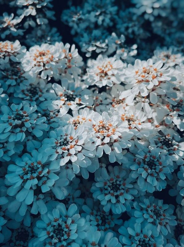Hot blossoms